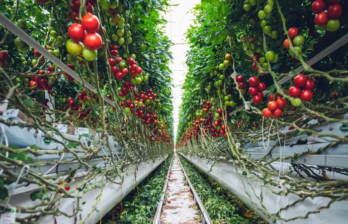 Is vertical farming truly sustainable?